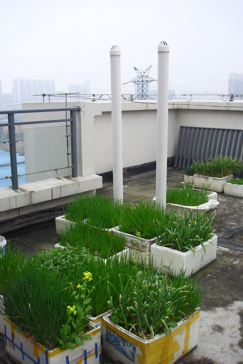 农村小菜园小花园设计图展示
