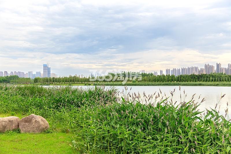 滨湖金茂悦周边环境公园实景图(9.4)